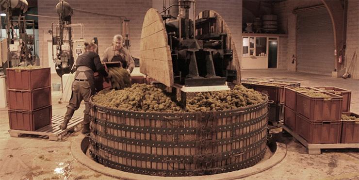 Povestea vinului – Vinul spumant şi vinars
